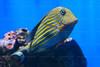 CRay-Fish-3632
