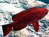 CRay-Fish-3651