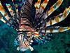 CRay-Fish-1391