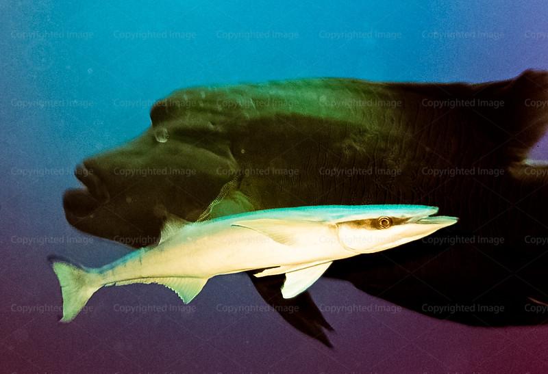 CRay-Fish--5