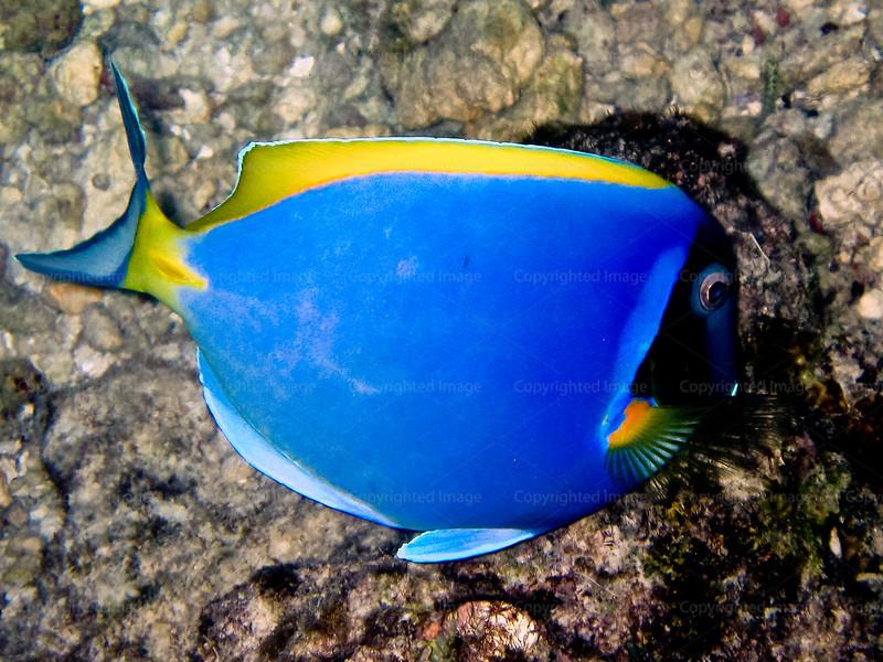 CRay-Fish-0021