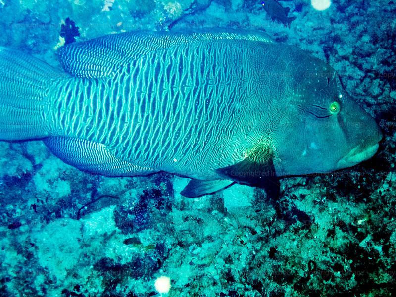 CRay-Fish-0261