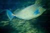 CRay-Fish-10