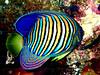 CRay-Fish-1390