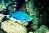 CRay-Fish--3
