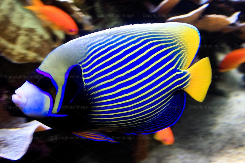 CRay-Fish-2714