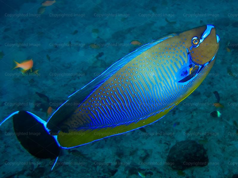 CRay-Fish-133