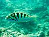 CRay-Fish-1555