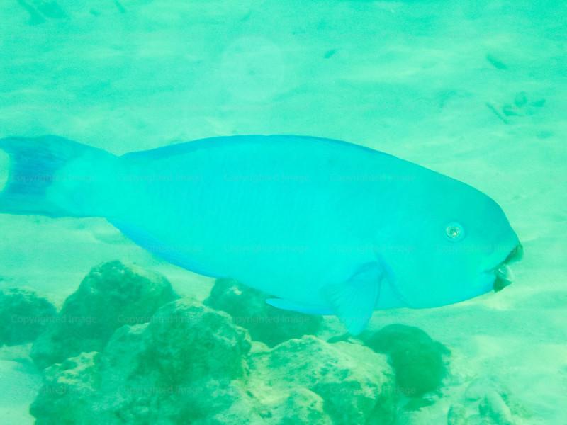 CRay-Fish-0235