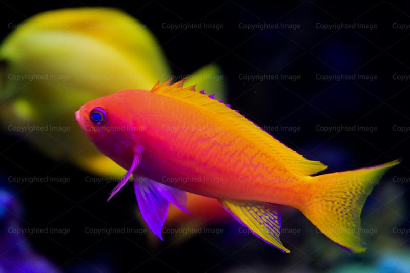 CRay-Fish-2756