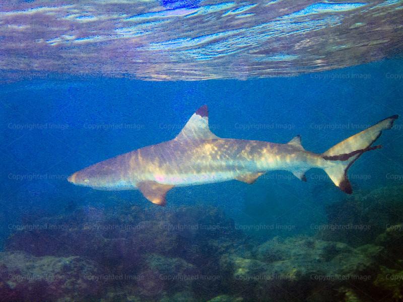CRay-Fish--17