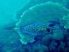 CRay-Fish-1313