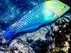 CRay-Fish-0018