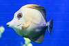 CRay-Fish-3636