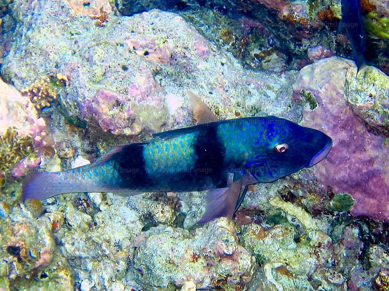 CRay-Fish--20
