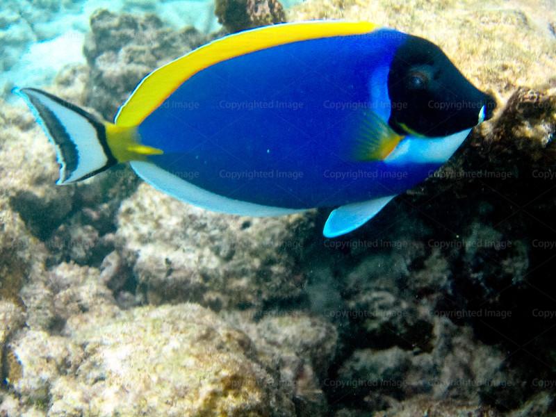 CRay-Fish--14