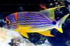 CRay-Fish-2695