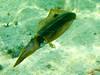 CRay-Fish-0611