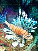 CRay-Fish-3174