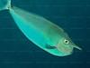 CRay-Fish-0063