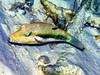 CRay-Fish-0016