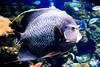 CRay-Fish-2680