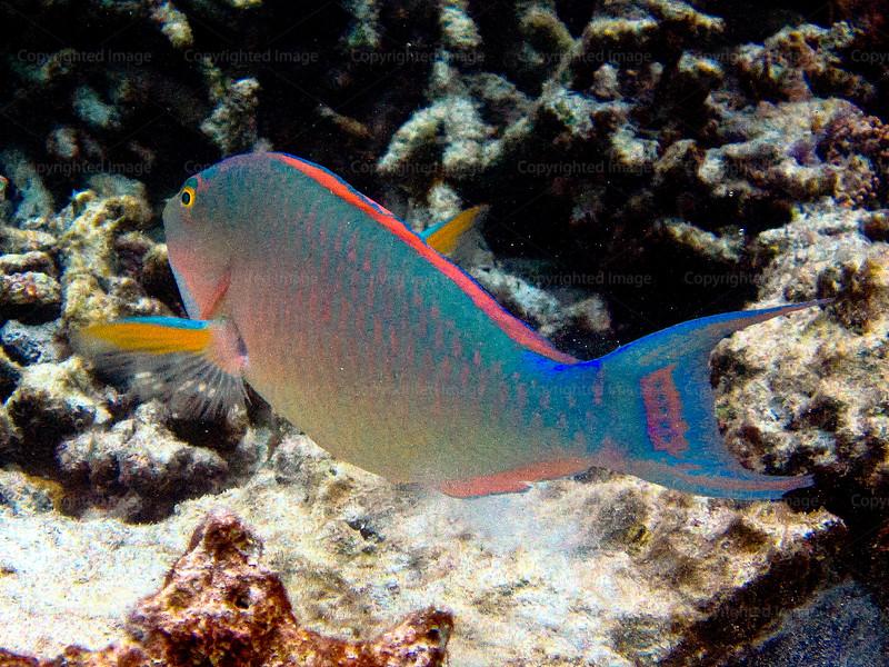CRay-Fish-3660