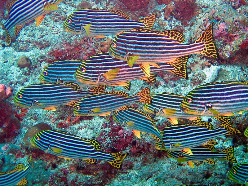 CRay-Fish-0246