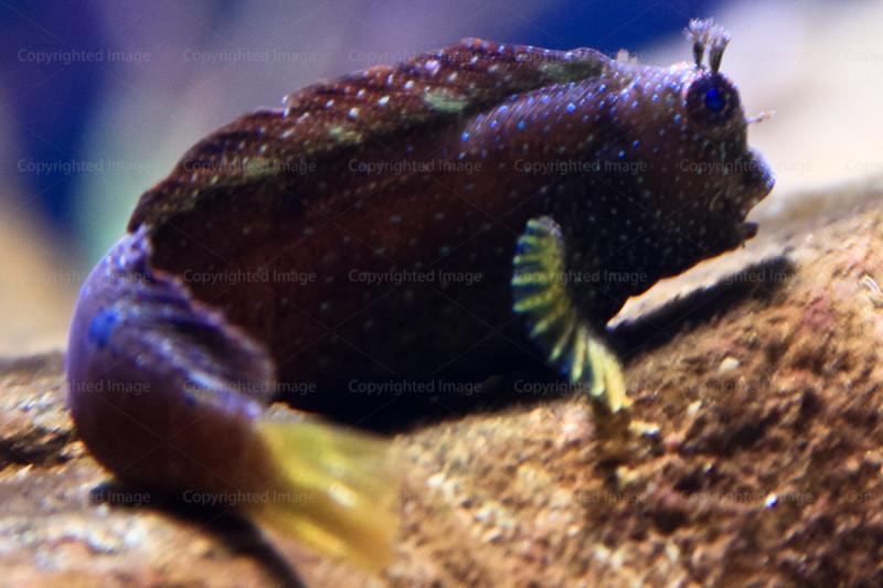 CRay-Fish-2623