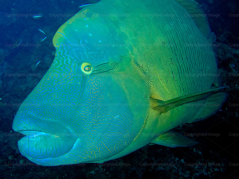 CRay-Fish-123