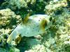 CRay-Fish-0209