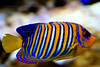 CRay-Fish-2599