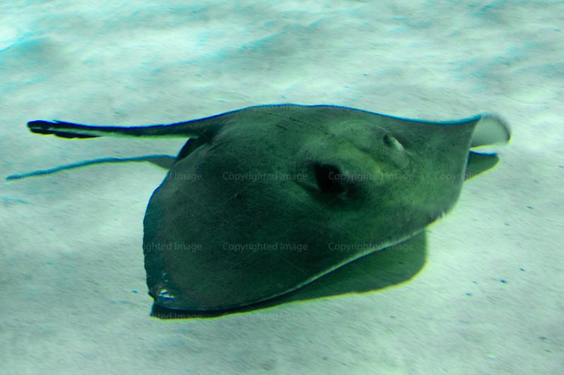 CRay-Fish-2635