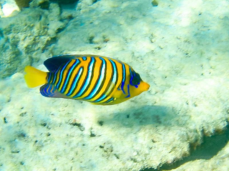 CRay-Fish-0214