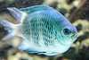 CRay-Fish-3664