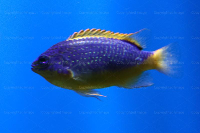 CRay-Fish-3642