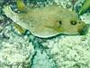 CRay-Fish-0111