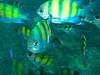 CRay-Fish-1587