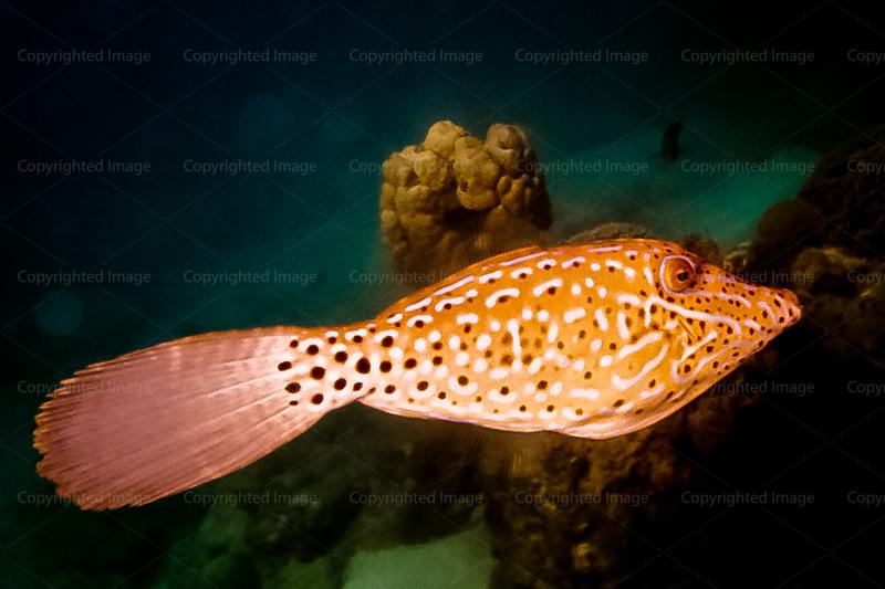 CRay-Fish-18