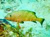CRay-Fish-0692
