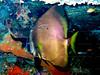 CRay-Fish-1250