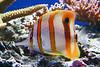 CRay-Fish-3668