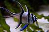 CRay-Fish-2558