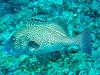 CRay-Fish-3034