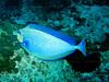 CRay-Fish-112