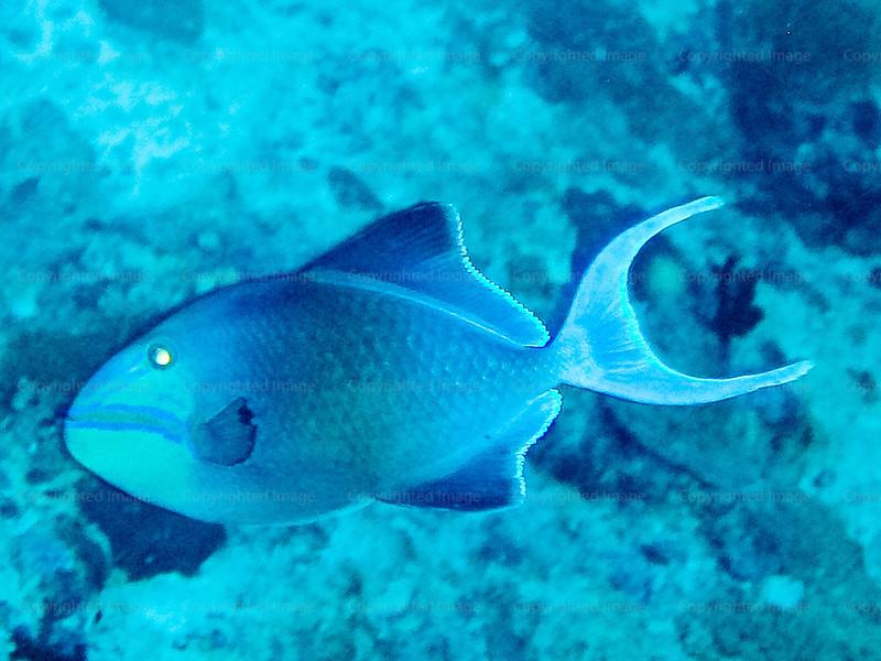 CRay-Fish-0318