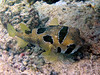 CRay-Fish-3656