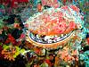 CRay-Fish-072