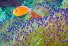CRay-Fish-2