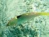 CRay-Fish-1428